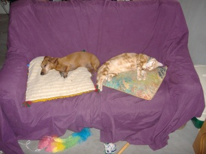 Dachshund Luke and Kitty Kat 2009 289